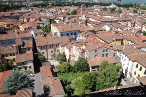 many-rooftops-lucca-italy-09