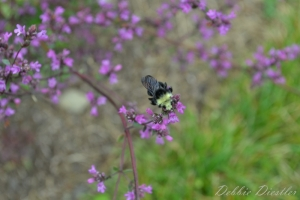 bee-and-pink-flowers-botanical-gardens-10