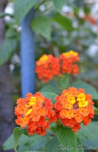 bright-orange-and-yellow-flowers-nice-12