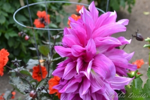 bright-pink-flower-botanical-gardens-10