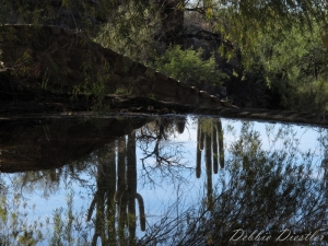 cacti-reflection-in-arizona-10