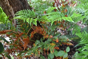 ferns-botanical-gardens-10