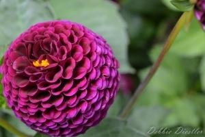 fushia-flower-10