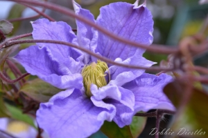 lavendar-blossom-botanical-gardens-10