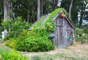 lush-green-garden-shed-10