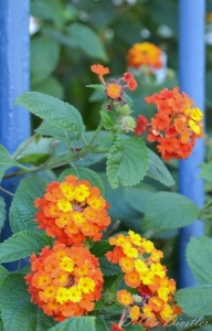 orange-and-yellow-flowers-in-nice-france-12