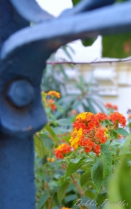 orange-flower-under-blue-gate-nice-12