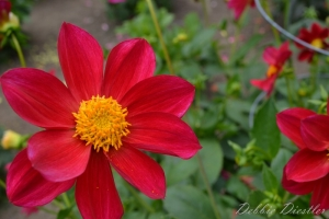 red-sunburst-botanical-gardens-10