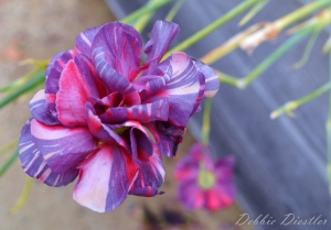 ribbon-flower-botanical-gardens-10