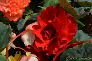 roja-botanical-gardens-10