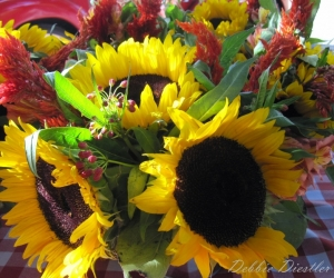 sunflowers-sonoma-ca-oct-11