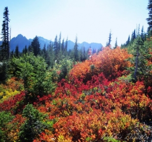 autum-color-near-mt-rainier-10