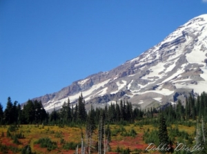 color-and-trees-below-mt-rainier-10