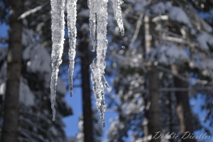 dripping-icicles-in-shingletown-11