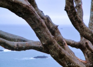 ocean-branches-in-trinidad-10