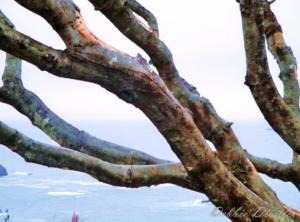 ocean-branches-trinidad-10