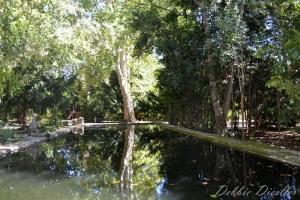 paul-cezzanes-resident-pond-aix-en-provence-12