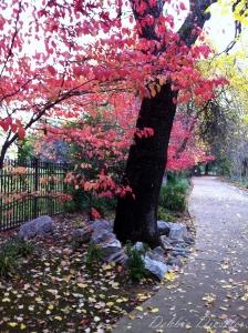 redding-ca-river-trail-walk-in-fall-10