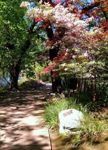 river-trail-walk-in-redding-ca-spring-13