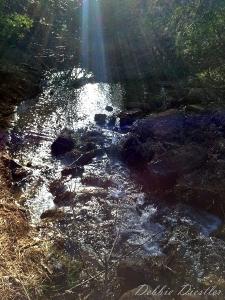 rushing-stream-shingletown