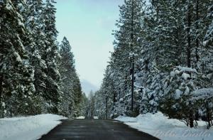 snow-on-woodridge-shingletown-11