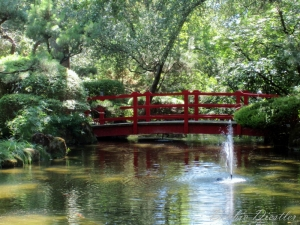 stockton-zoo-bridge-and-gardens-in-summer-11