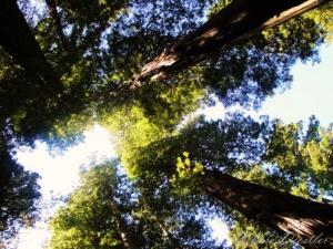 tree-tops-trinidad-10