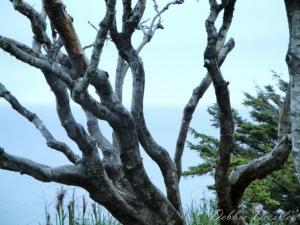 branch-reach-trinidad-10
