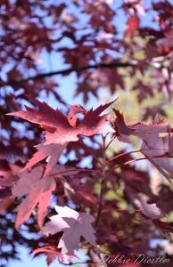 dappled-leaves-shingletown-ca-12