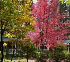 fall-colors-in-shingletown-11