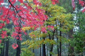 fall-leaves-cascade-shingletown-ca-12