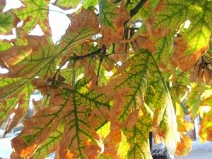 fall-leaves-in-ashland